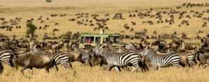 africa-safari-Cover1-min